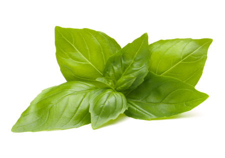 Sweet basil leaves isolated on white background Stock Photo