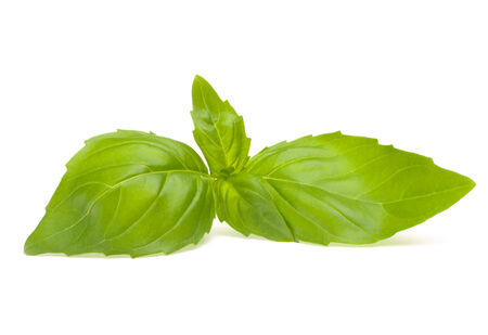 flavorings: Sweet basil leaves isolated on white background Stock Photo
