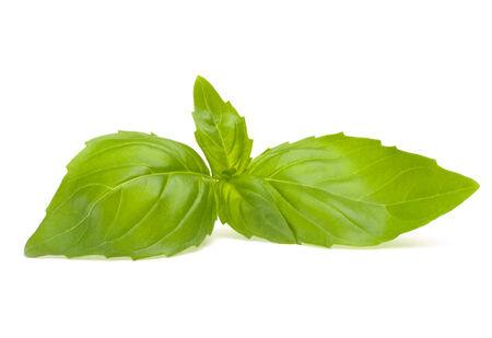 Sweet basil leaves isolated on white background Stock Photo