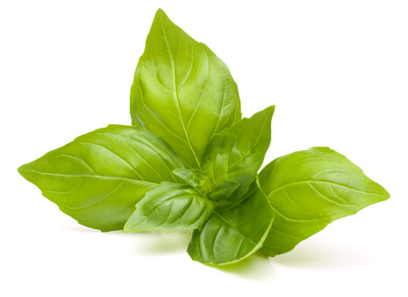 Sweet basil leaves isolated on white background Banque d'images