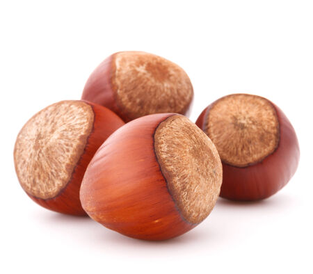 filbert nut: hazelnut or filbert nut isolated
