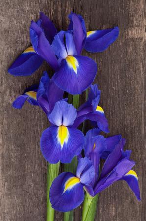 blueflag: Blueflag o el iris de flores sobre fondo de madera sucio Foto de archivo