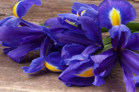 blueflag: Blueflag o el iris de flores sobre fondo de madera grungy