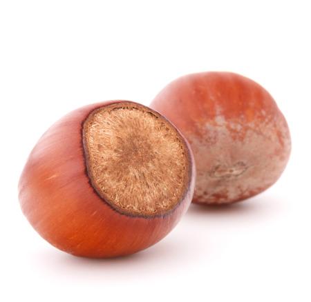 filbert nut: hazelnut or filbert nut isolated on white background cutout