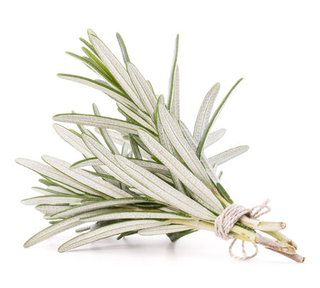 potherb: rosemary herb spice leaves isolated on white background cutout Stock Photo