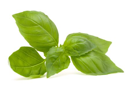 basil: Sweet basil leaves isolated on white background Stock Photo