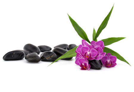 meditation isolated white: Zen pebbles and orchid flower. Stone spa and healthcare concept. Stock Photo