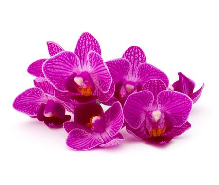 mazzo di fiori: fiore testa Mazzo dell'orchidea isolato su sfondo bianco ritaglio