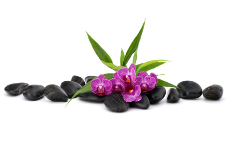 white stones: Zen pebbles and orchid flower. Stone spa and healthcare concept. Stock Photo