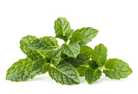 Fresh mint herb leaves isolated on white background cutout Stockfoto