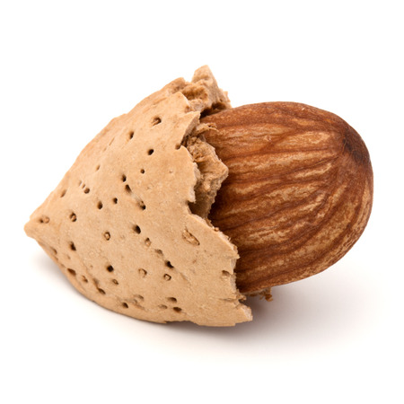 nut shell: Almond nut in shell and shelled isolated on white background close up