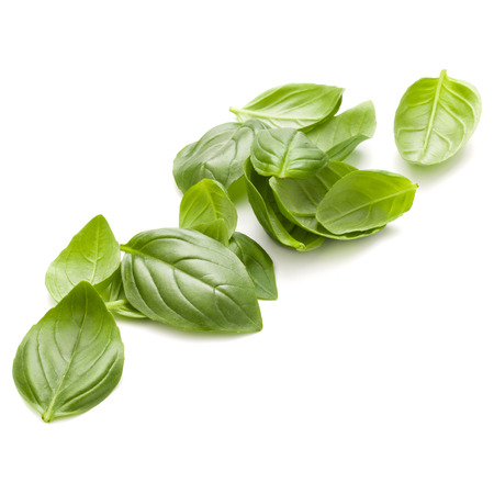 handful: Sweet basil herb leaves handful isolated on white background closeup Stock Photo