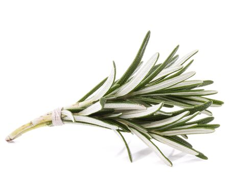 rosemary herb spice leaves isolated on white background cutout Stock Photo