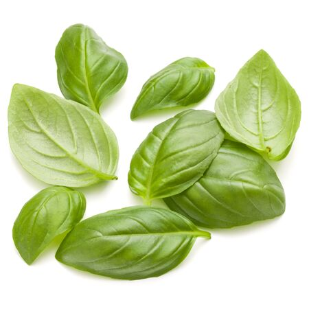 relish: Sweet basil herb leaves handful isolated on white background closeup Stock Photo