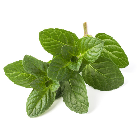 Fresh mint herb leaves isolated on white background cutout Stock Photo