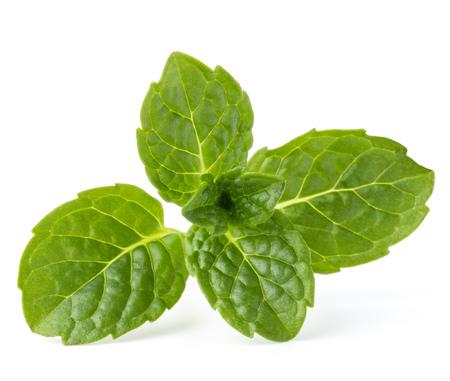 lemon balm: Fresh mint herb leaves isolated on white background cutout Stock Photo