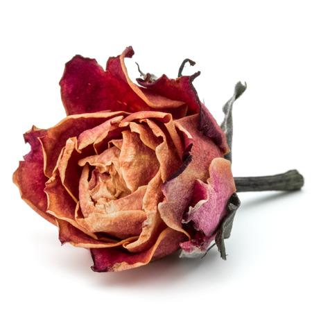 dode bladeren: gedroogde roze bloem hoofd op een witte achtergrond knipsel
