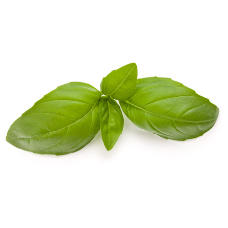 relish: Sweet basil herb leaves isolated on white background closeup Stock Photo