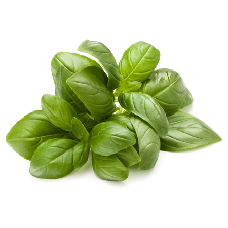 relish: Sweet basil herb leaves bunch isolated on white background Stock Photo