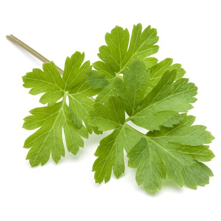 relish: Fresh parsley herb leaves  isolated on white background