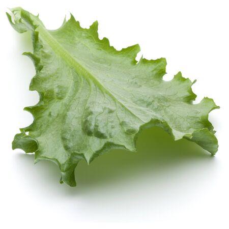 escarola: Close up studio shot of fresh green endive salad leaf isolated on white background.