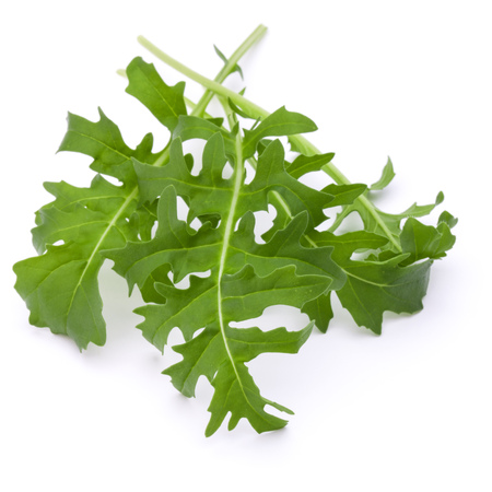 roquette: Close up studio shot of green fresh rucola leaves isolated on white background. Rocket salad or arugula.
