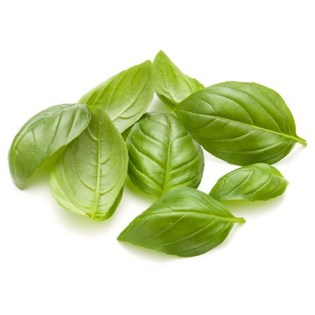 Sweet basil herb leaves handful isolated on white background closeup Stock Photo