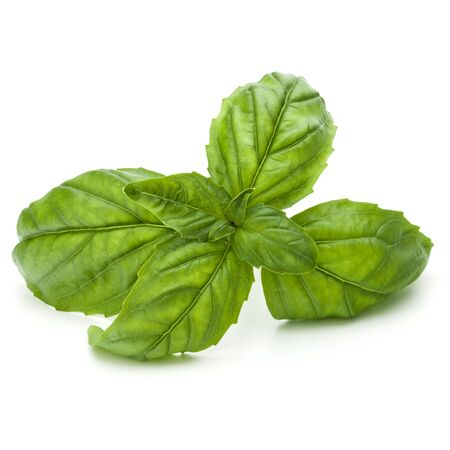 relish: Close up studio shot of fresh green basil herb leaves isolated on white background. Sweet Genovese basil.