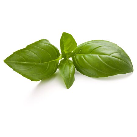 Sweet basil herb leaves isolated on white background closeup Stock Photo