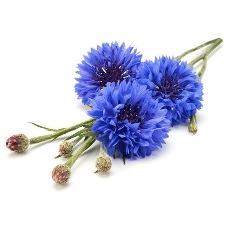 青いコーンフラワー ハーブまたは独身ボタン花の花束ホワイト バック グラウンド素材に分離