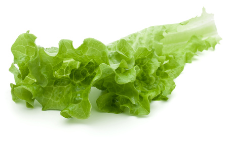 lactuca: fresh green lettuce salad leaves isolated on white background