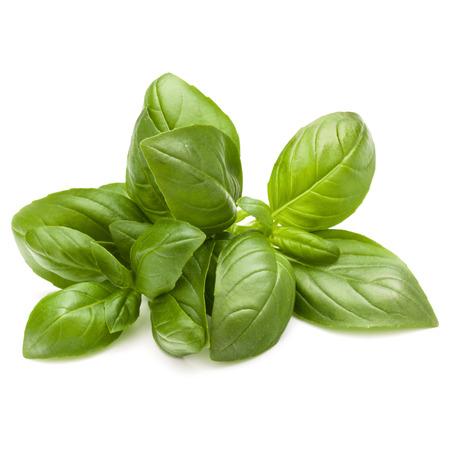 Doux basilic herbes tas tas isolé sur fond blanc Banque d'images - 83813055