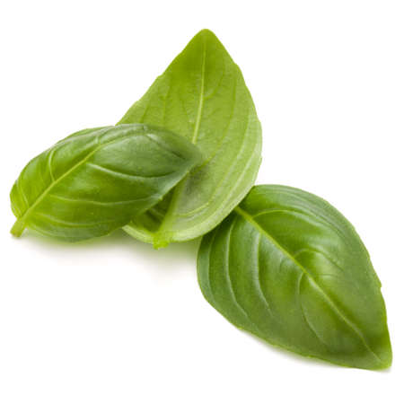 Douce herbe feuilles de basilic isolé sur fond blanc closeup Banque d'images - 83820144