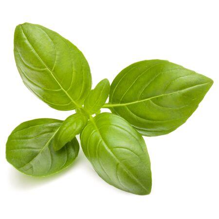 Doux basilic herbes feuilles isolé sur fond blanc closeup Banque d'images - 83820149