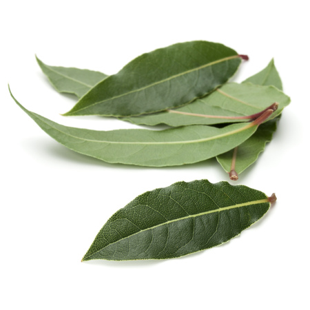 Aromatic bay leaves isolated on white background cutout Stock Photo