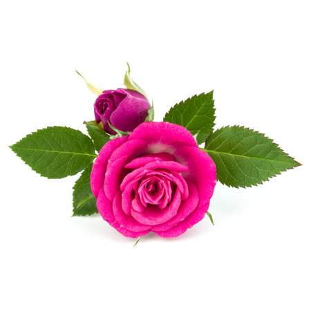 pink rose flower bouquet isolated on white background cutout Stock Photo
