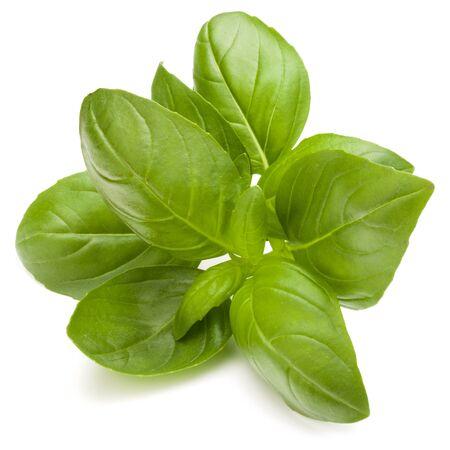 Doux basilic herbes feuilles isolé sur fond blanc closeup Banque d'images - 84182830