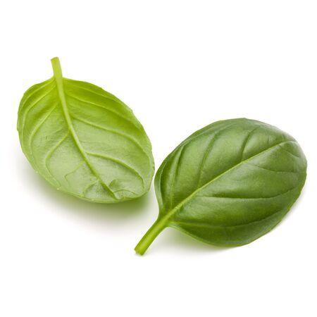 Doux basilic herbes feuilles isolé sur fond blanc closeup Banque d'images - 84735627