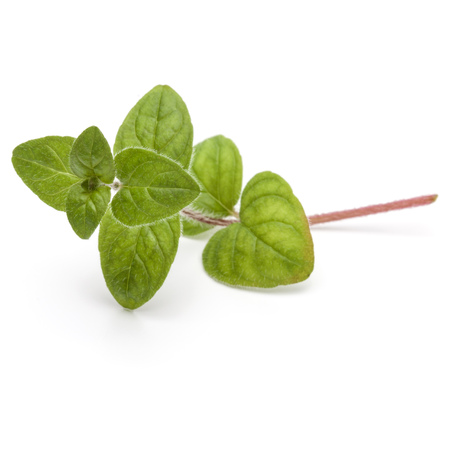 Oregano of marjolein bladeren geïsoleerd op witte achtergrond cutout Stockfoto