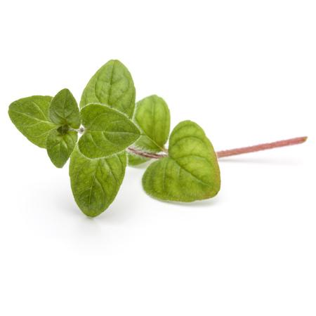 Oregano or marjoram leaves isolated on white background cutout Zdjęcie Seryjne - 84952703