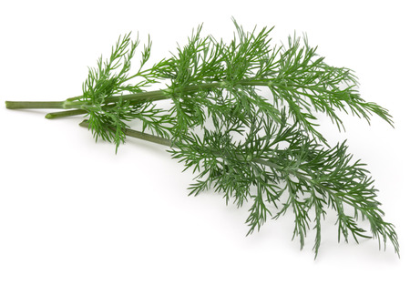 Close up shot of branch of fresh green dill herb leaves isolated on white background Imagens