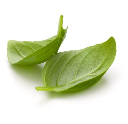 Doux basilic herbes feuilles isolé sur fond blanc closeup Banque d'images - 84949938