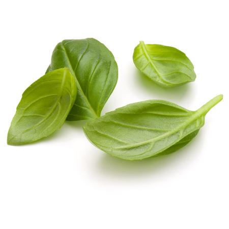 Doux basilic herbe feuilles poignée isolé sur fond blanc closeup Banque d'images - 86314573