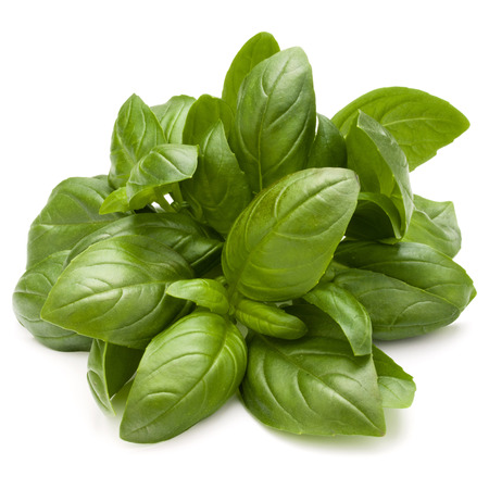 Sweet basil herb leaves bunch isolated on white background Stock Photo