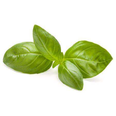 Doux basilic herbes feuilles isolé sur fond blanc closeup Banque d'images - 86314687