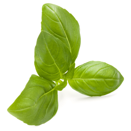Doux basilic herbes feuilles isolé sur fond blanc closeup Banque d'images - 87609029