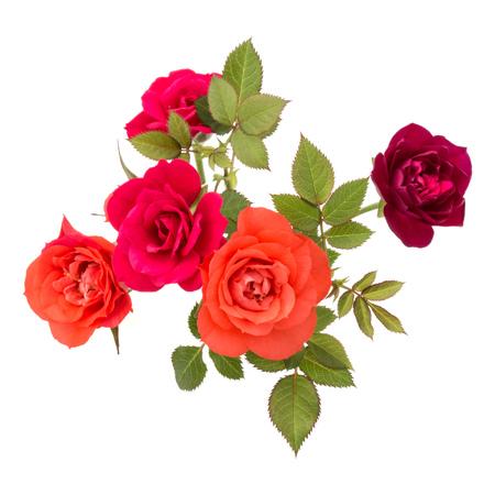 kleurrijke roos bloem boeket met groene bladeren geïsoleerd op witte achtergrond uitsnijden