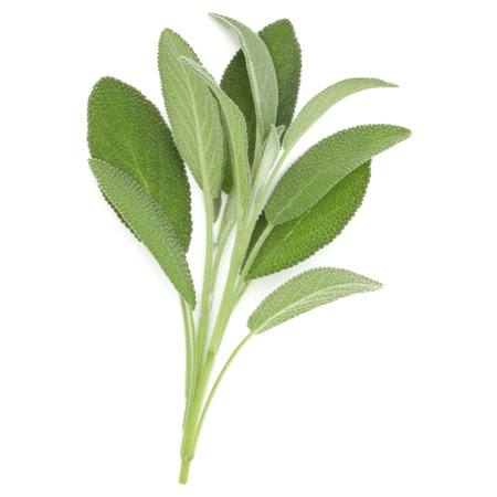 Sage herb leaves bouquet isolated on white background