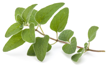 Oregano or marjoram leaves isolated on white background Stock Photo