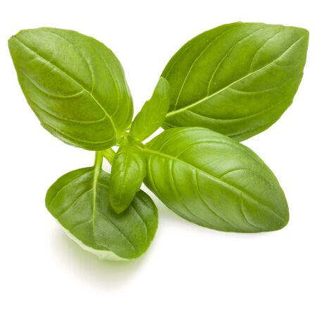 Douce herbe feuilles de basilic isolé sur fond blanc closeup Banque d'images - 88427015